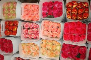 Поставка цветов для цветочного бизнеса