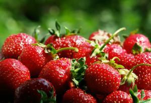 Какая ягода лучше подойдет для выращивания на продажу?