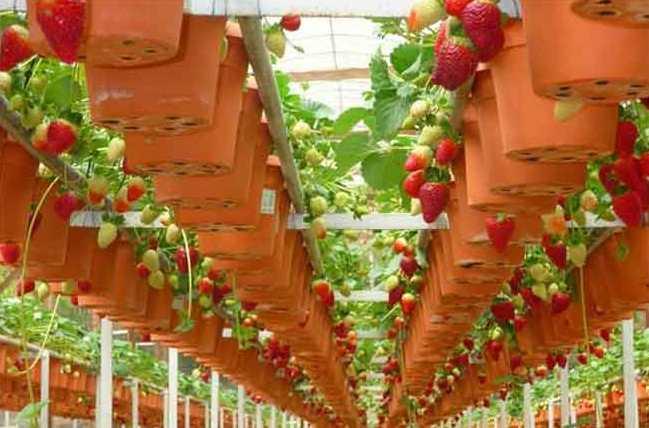 Подвесное выращивание