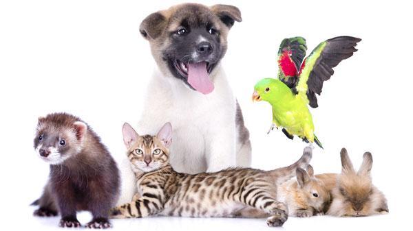 Лечение животных