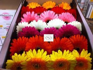 Закупка цветов для бизнеса