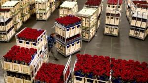 Поставщики цветов для цветочного бизнеса
