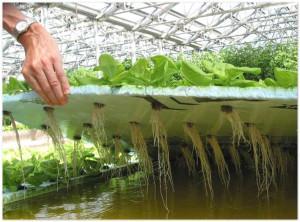 Бизнес-план по выращиванию зелени
