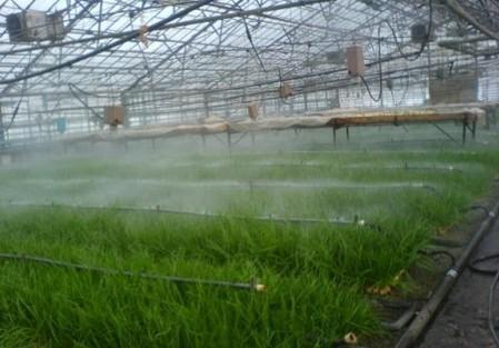 Как правильно вырастить зелёный лук в подвале